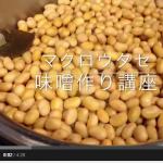 手作り味噌にチャレンジ!おいしい味噌の作り方(動画)