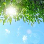 日光アレルギー対策として身体の中の大掃除をしてみましょう!