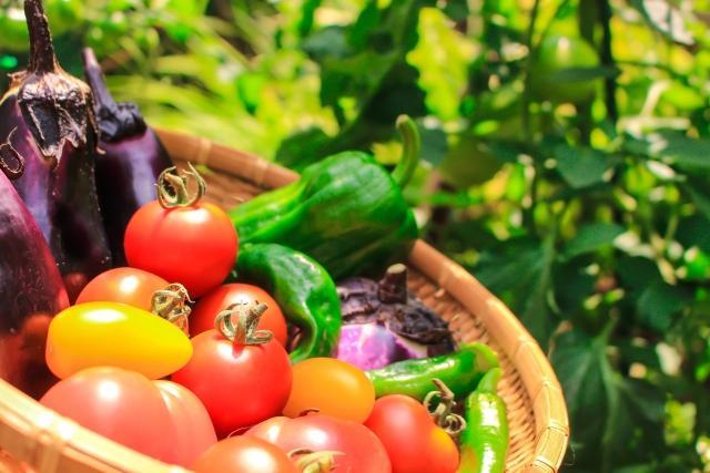 生鮮食品 新鮮