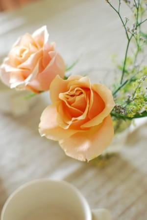 マクロウタセ オレンジバラ