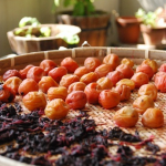 本物の梅干し・昔ながらの梅干しの作り方