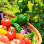 生鮮食品は鮮度が命!良いパワーを入れましょう!